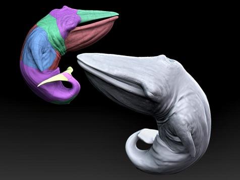 Whale fetus CGI.